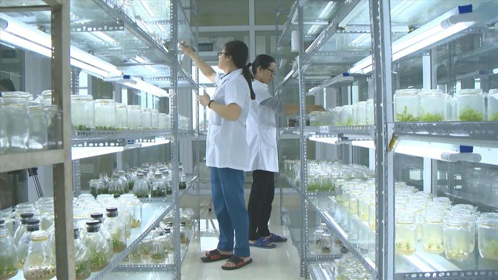Nghiên cứu sản xuất thử nghiệm các loại hoa quả cao cấp tại Sở Khoa học và Công nghệ