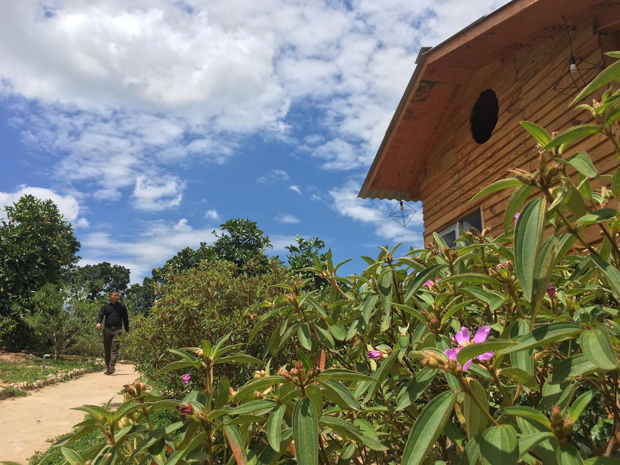 Nằm giữa vườn cà phê và nhiều cây ăn trái. Ảnh: YMS