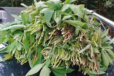 Đọt củ mì là món rau tạo nên sức hấp dẩn của cháo măng.